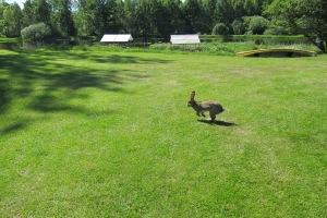See bunny run...