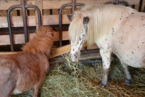 Little Horses!!